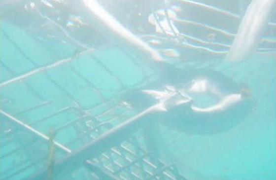 Uprising-underwater-560