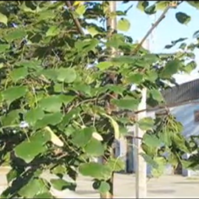 rtree